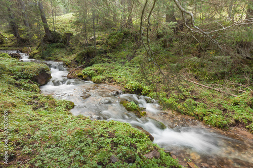 Fototapeten Forest river A stream flows in the forest, Italian Alps