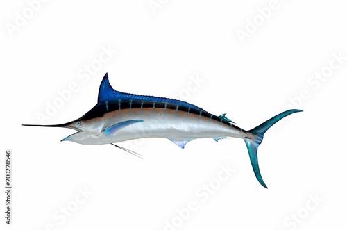 Blue Marlin Fish Mounted