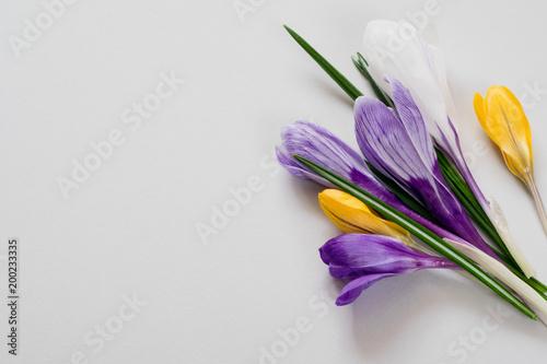 Fototapeta Kolorowe kwiaty na szarym tle obraz