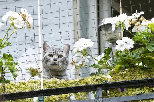 Obraz Katze am Balkon - fototapety do salonu
