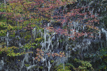 Autumn Colours And Lichen In C...
