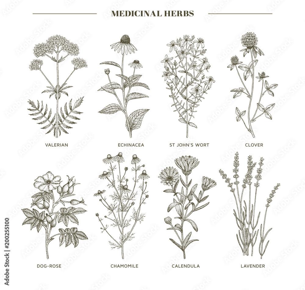 Fototapety, obrazy: Medicinal herbs.