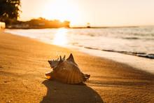 Muschel Am Strand In Der K...