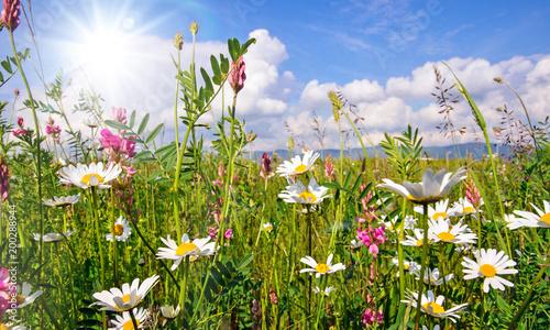 Foto op Canvas Madeliefjes Frühlingserwachen: Meditation, Glück, Freude, Entspannung: Relaxen in Blumenwiese mit leuchtend schönen Margeriten unter blauem Himmel mit Sonne :)