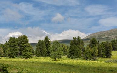 Fototapeta na wymiar Beautiful summer landscape on top of Altai Krai mountains.