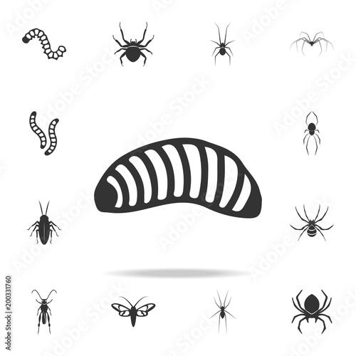 Fotografía larva