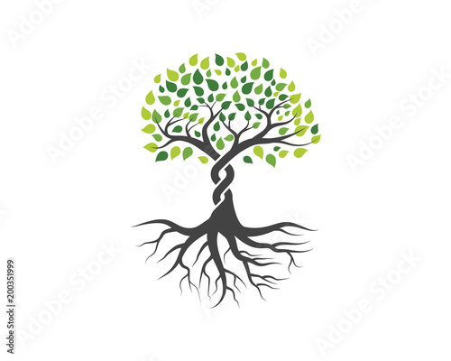 Canvas Logos of green Tree leaf vector