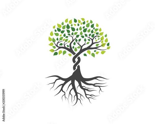 Fototapeta Logos of green Tree leaf vector