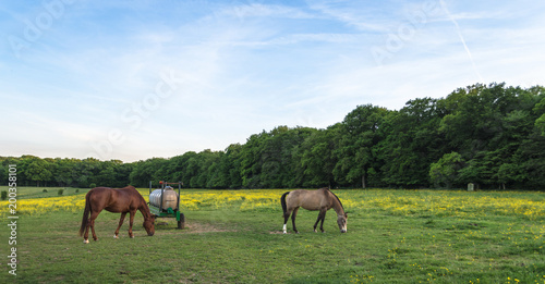 Meadow with blooming wild flowers and horse grazing