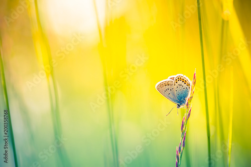 Tuinposter Zwavel geel Nature background concept. Beautiful summer meadow background. Inspirational nature closeup.