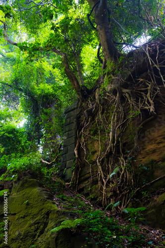 Fototapeta 猿島 obraz na płótnie