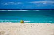 ripe coconut lying on the beautiful beaches of the Caribbean sea