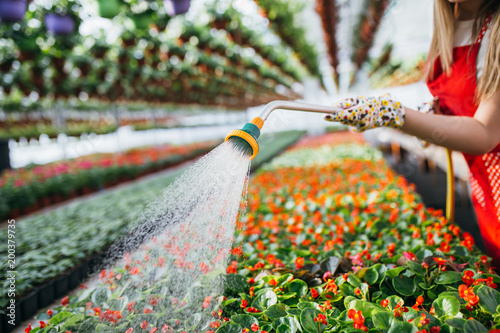 Young women working in greenhouse and watering beautiful flowers Wallpaper Mural