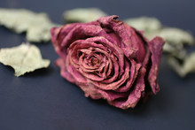 Withered Red Rose Flower And L...