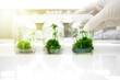 Leinwanddruck Bild - green plant tissue culture in glass bottle holding on scientist hand in biotechnology science laboratory background