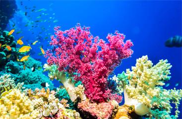Underwater pink coral reef ...