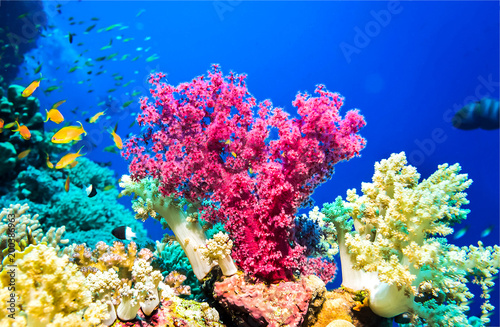 Photo Stands Coral reefs Underwater pink coral reef landscape