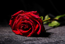 Red Rose On Dark Surface Against Black Background
