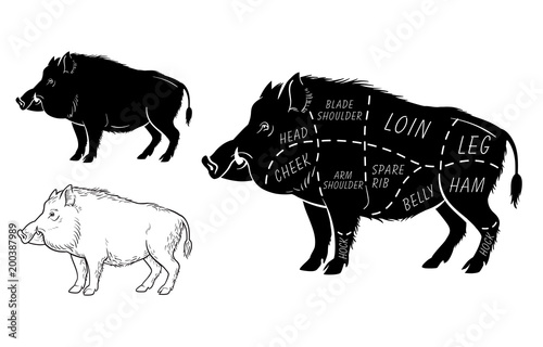 Photo Wild hog, boar game meat cut diagram scheme - elements set on chalkboard