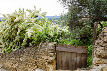 Old Stone Wall Overgrown With ...
