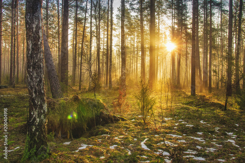 Fotobehang Natuur Landscape of spring forest in backlight. Morning rays of sun in frame at dawn in picturesque forest. Natural nature. Sunbeams through trees of woodland. Spring background.