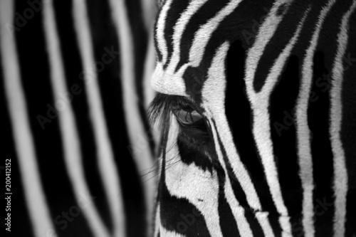 Door stickers Zebra Zebra Locked