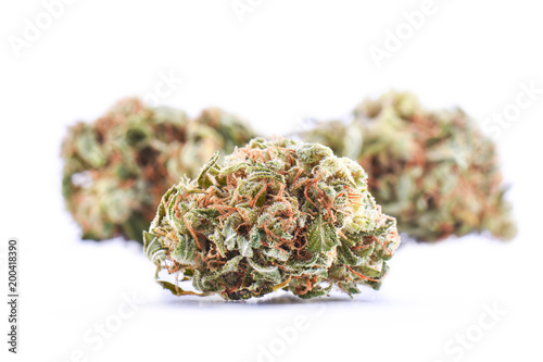 Photo Medical marijuana bud isolated on white background
