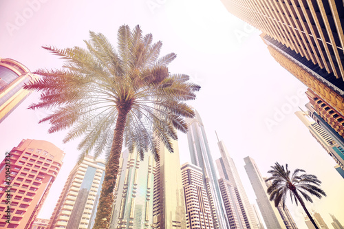 Palm trees in front of modern skyscrapers in Dubai, color toned picture, United Arab Emirates.