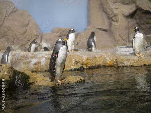 Poster Pinguin very nice penguin in aquarium