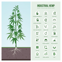 Industrial Hemp Uses And Produ...