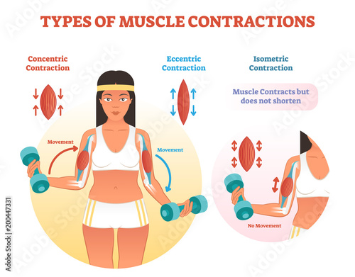 Types of muscle contractions with arm cross section and weight lifting movement Canvas-taulu