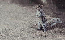 Squirrel Oon City Park