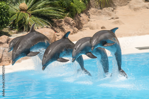 Foto op Plexiglas Dolfijn dolphin