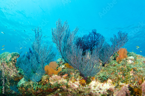 Poster Coral reefs Coral reef scenics of the Sea of Cortez, Baja California Sur, Mexico.