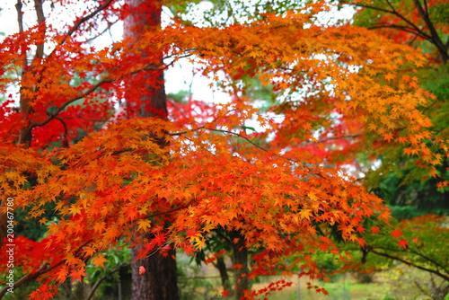 Foto op Canvas Baksteen 秋の公園の風景30