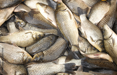 Fotobehang Vis close up live carp fish for sale