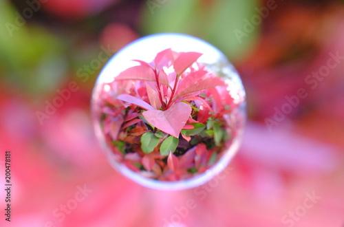 Foto op Canvas Candy roze レッドロビンを閉じ込めて