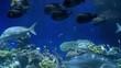Underwater fish life 4