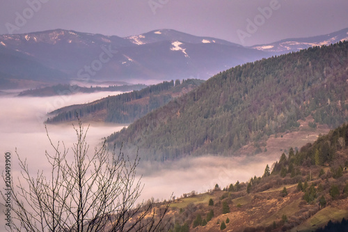 Foto op Canvas Lavendel Spring comes to the Carpathian Mountains