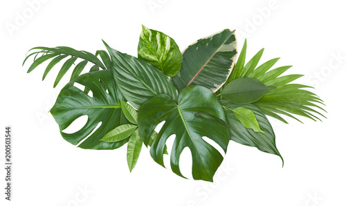 Spot of exotic plant green leaves isolated on white background