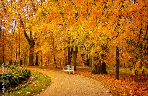 Fototapeta park autumn-park-alley-bench-landscape