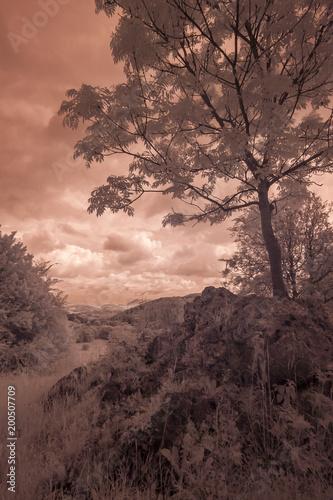 Foto op Plexiglas Chocoladebruin Landschaft in Infrarot