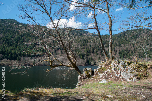 Foto op Aluminium Grijze traf. closeup of trees and rocks at lake of Kruth with beautiful cloudy sky on background in alsace - France