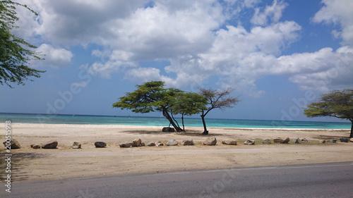 Photo Aruba Divi tree at a beach