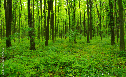 green forest in spring #200537736