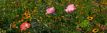 Photo Of Poppies In A Field Of Wild Flowers, Taken On A Sunny Day In Mid-summer, Eastcote, UK