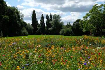 Panel Szklany Łąka Photo of a meadow of wild flowers in a park, taken on a sunny day in midsummer in Eastcote, UK