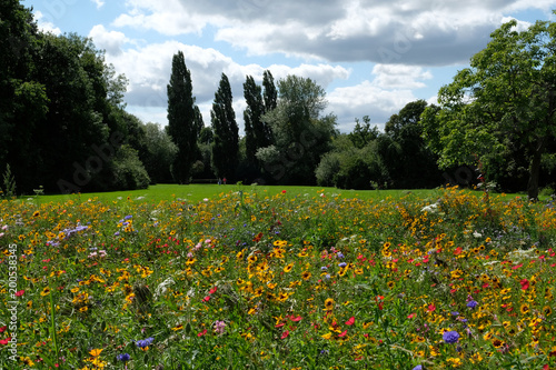 Photo of a meadow of wild flowers in a park, taken on a sunny day in midsummer i Canvas Print