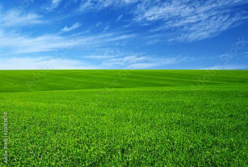 Tuinposter Weide, Moeras Green grass field