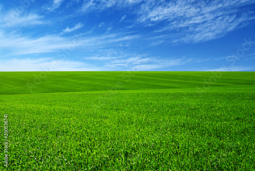 Staande foto Weide, Moeras Green grass field